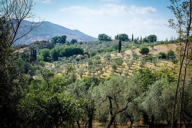Commande groupée d'huile d'olive bio