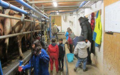 Traite et chocolat chaud à la ferme de Madame Vache