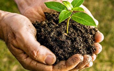 Commande groupée de compost, c'est reparti !