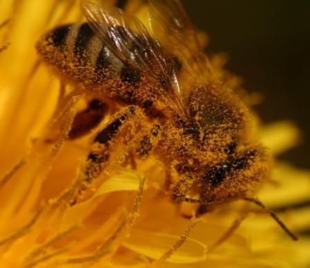 Ruches et abeilles le long de la Sûre