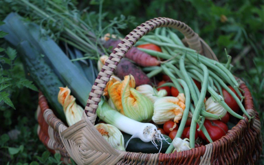Des légumes frais pour la vallée