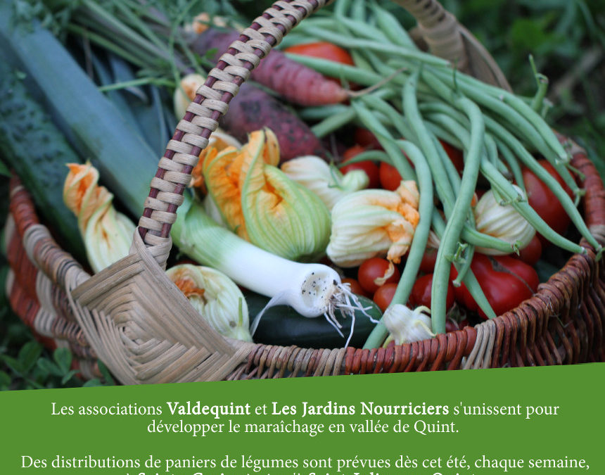 Distribution de paniers de légumes à Ste-Croix : dernière ligne droite !