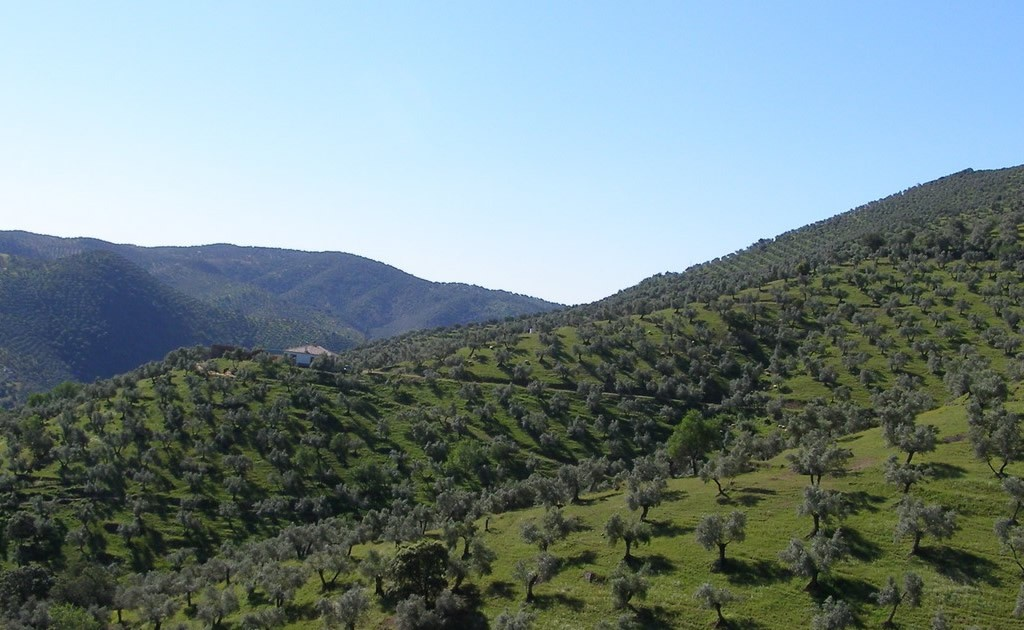 """Achat groupé d'huile d'olive bio """"Olivar de la Luna"""""""
