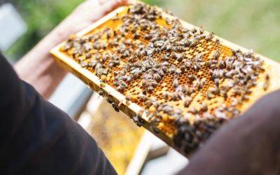 Des nouvelles du rucher citoyen de la vallée de Quint !