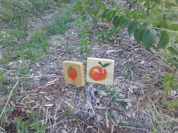 La pépinière de fruitiers: premiers plants disponibles et retour sur les greffes d'automne!