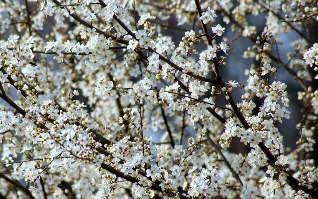 «10 000 arbres fruitiers pour la Biovallée»