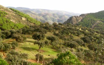 Commande collective d'huile d'olive : c'est maintenant !