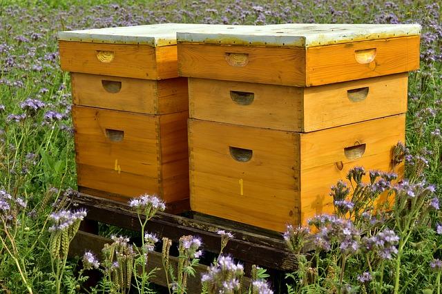 Des nouvelles du groupe apiculture !